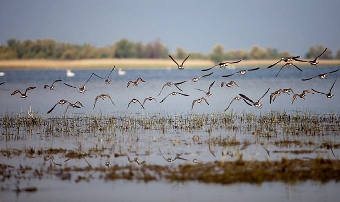 The modern Danube Delta began forming after 4,000 BC in a gulf of the Black Sea, when the sea rose to its present level.