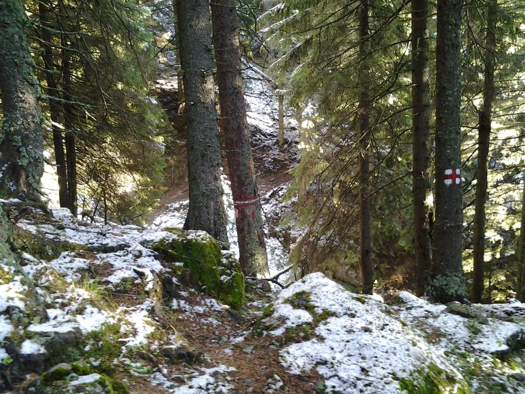 Bucegi Mountains first snow, Pure Romania, freedom, Beauty of Romania nature (49)